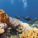 8 Great Barrier Reef Day Tours